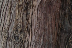 western red cedar for national hives