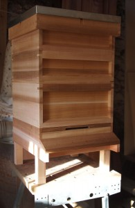 Recent Cedar Hive