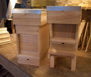 6 Frame Nucleus Hive